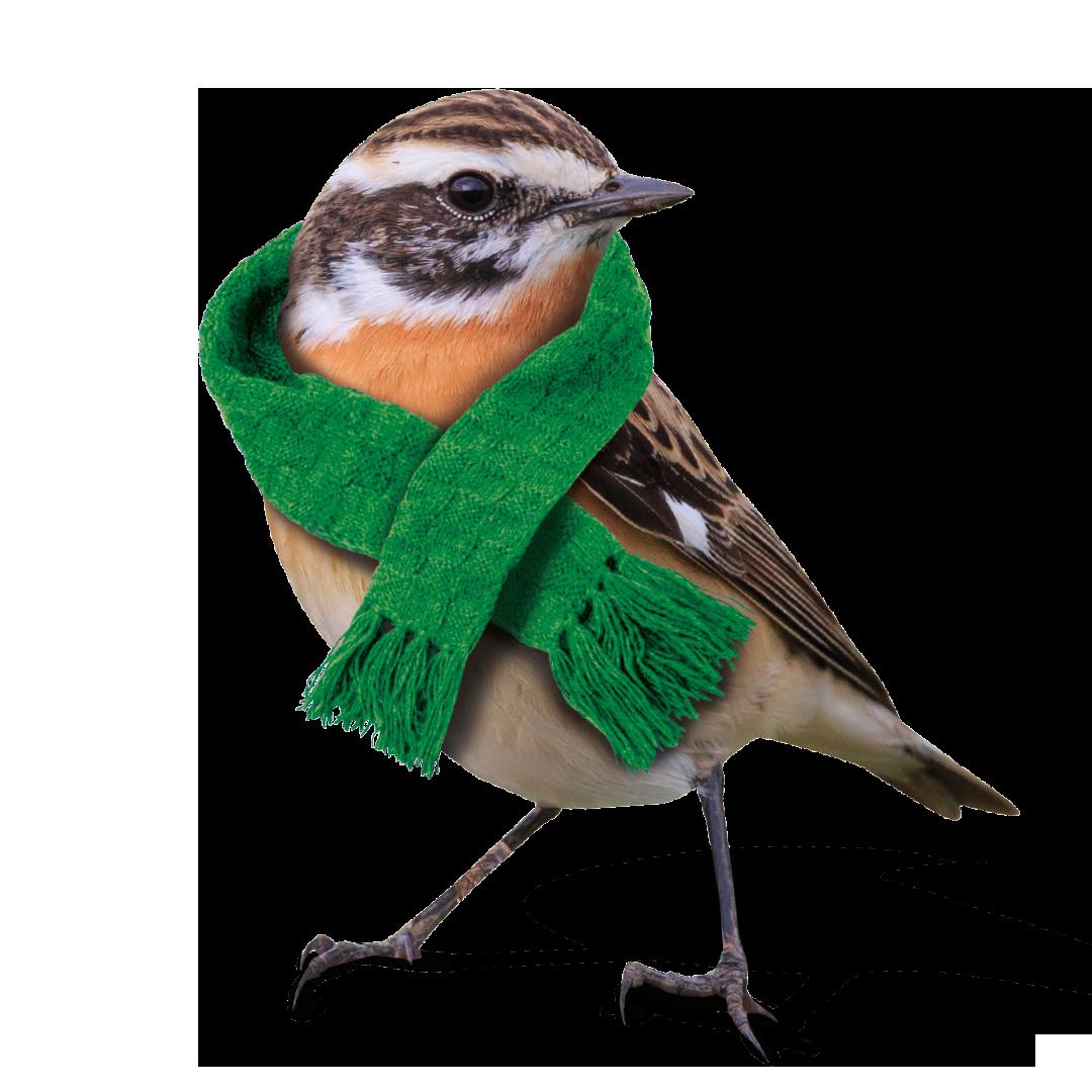 Stadtwerke Winnenden: Vogel Kampagne